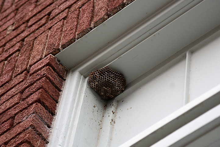 We provide a wasp nest removal service for domestic and commercial properties in Lee.